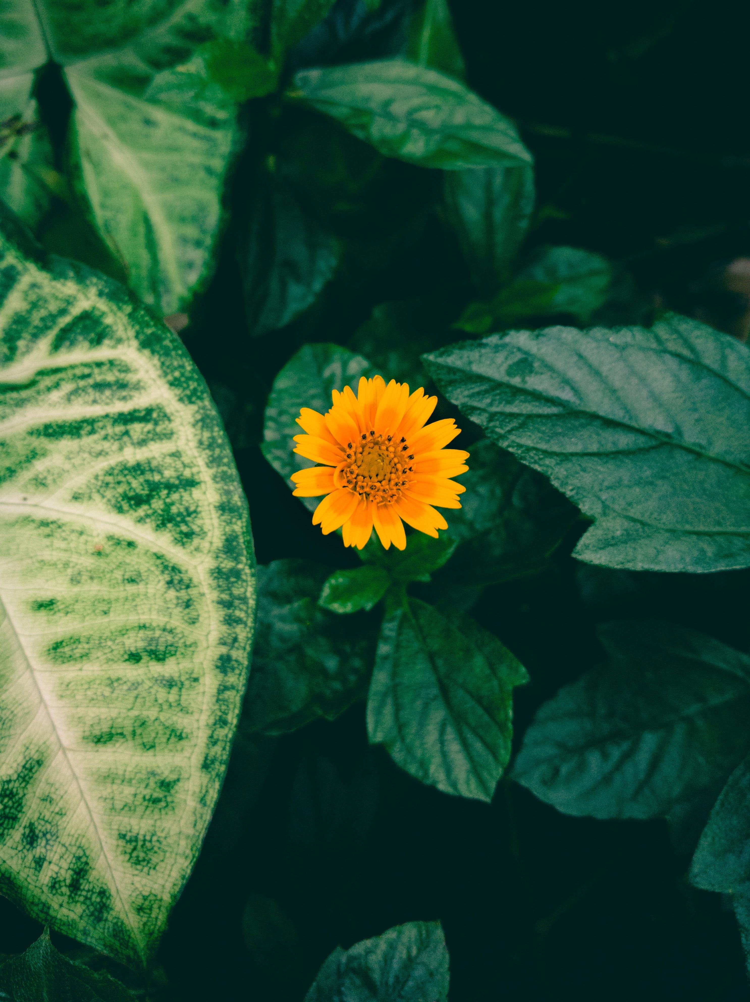 Free stock photo of flowers, yellow, flower, green