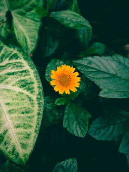 Free stock photo of flowers, yellow, flower, green