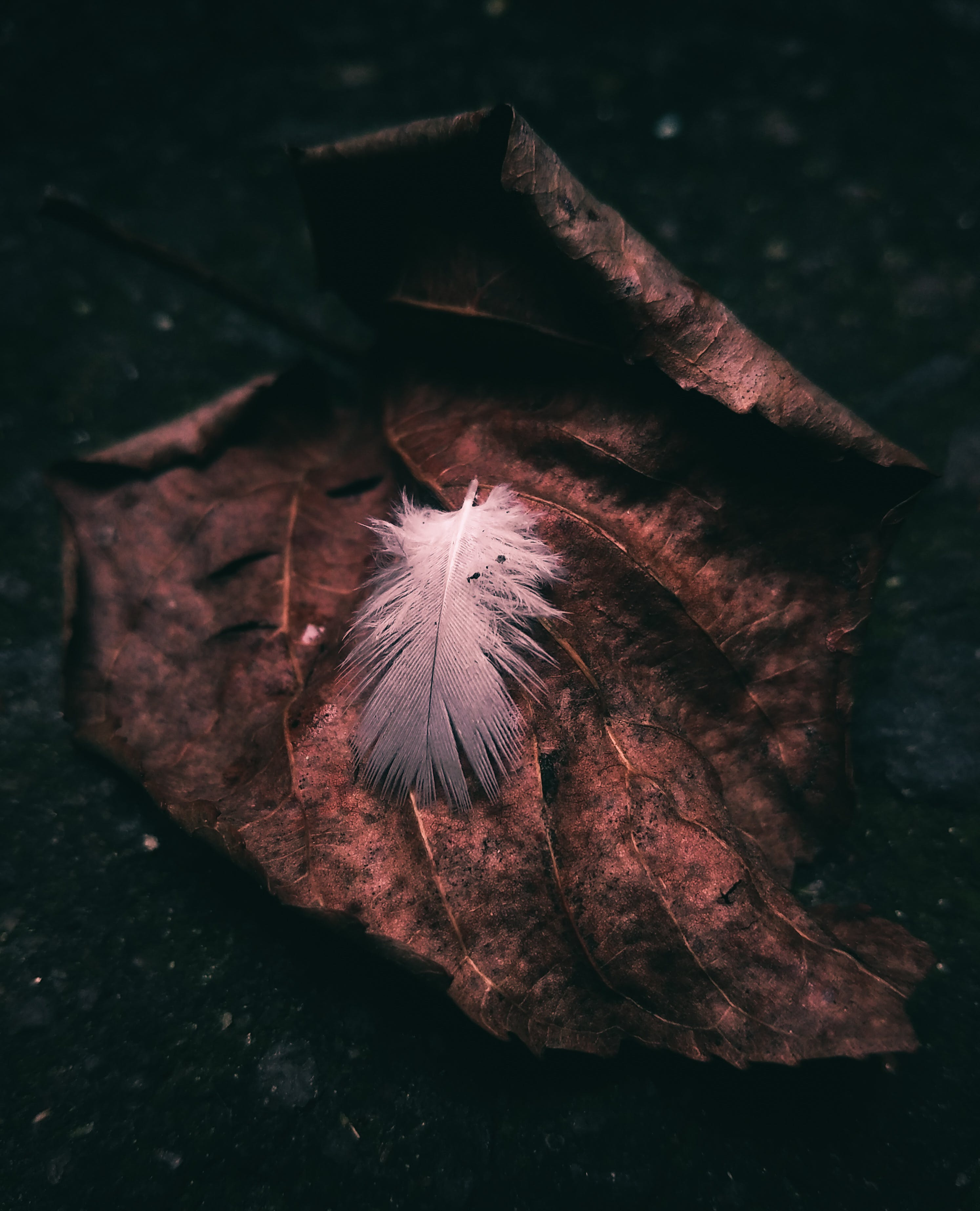 Free stock photo of leaf, autumn, grunge, feather