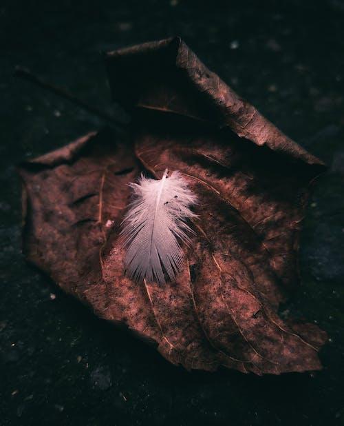 民间, 破舊, 羽毛 的 免费素材照片