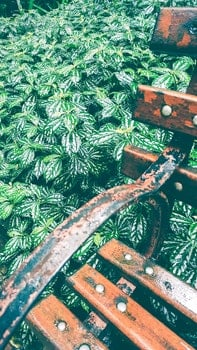 Free stock photo of wood, garden, orange, green