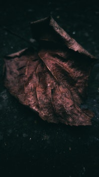 Free stock photo of leaf, autumn, brown, grunge