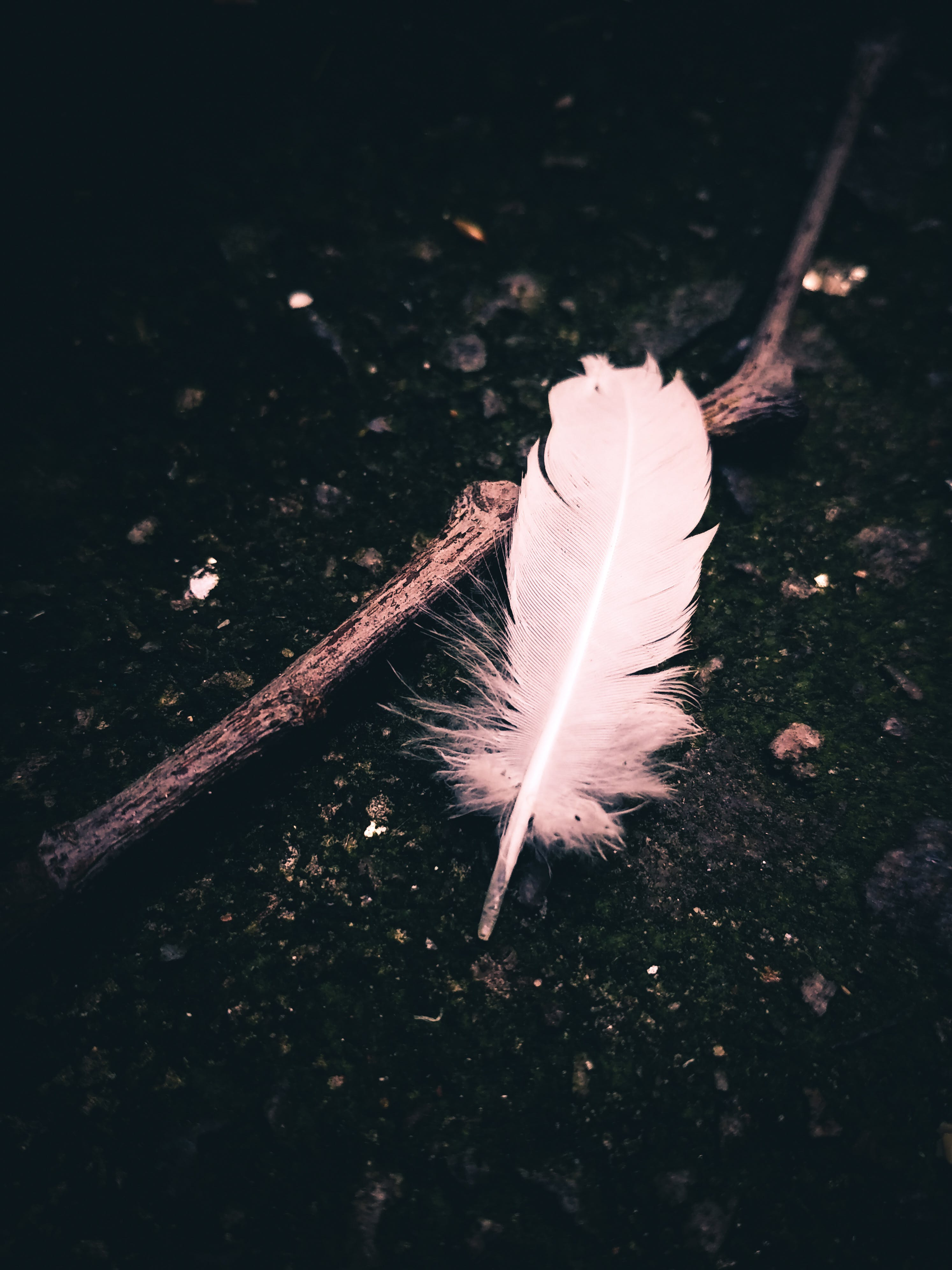 Gray Feather on Tree Stem