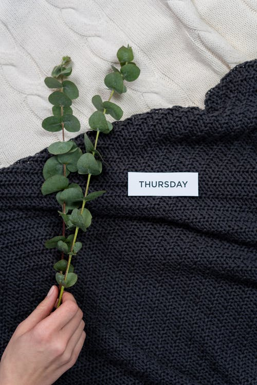 Green Plant on Black Textile