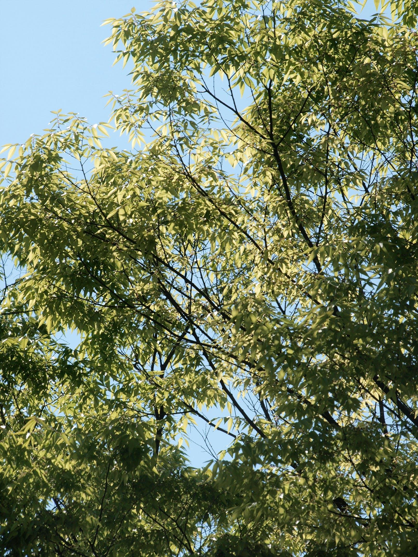Gratis lagerfoto af grøn, grønt blad, træer
