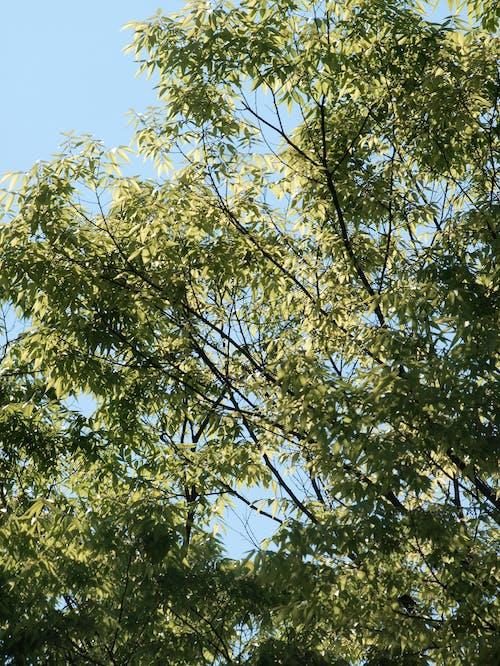 Immagine gratuita di alberi, foglia verde, verde