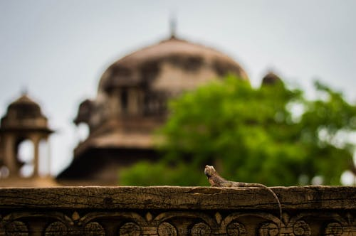 Free stock photo of colors in india, heritage, nikon