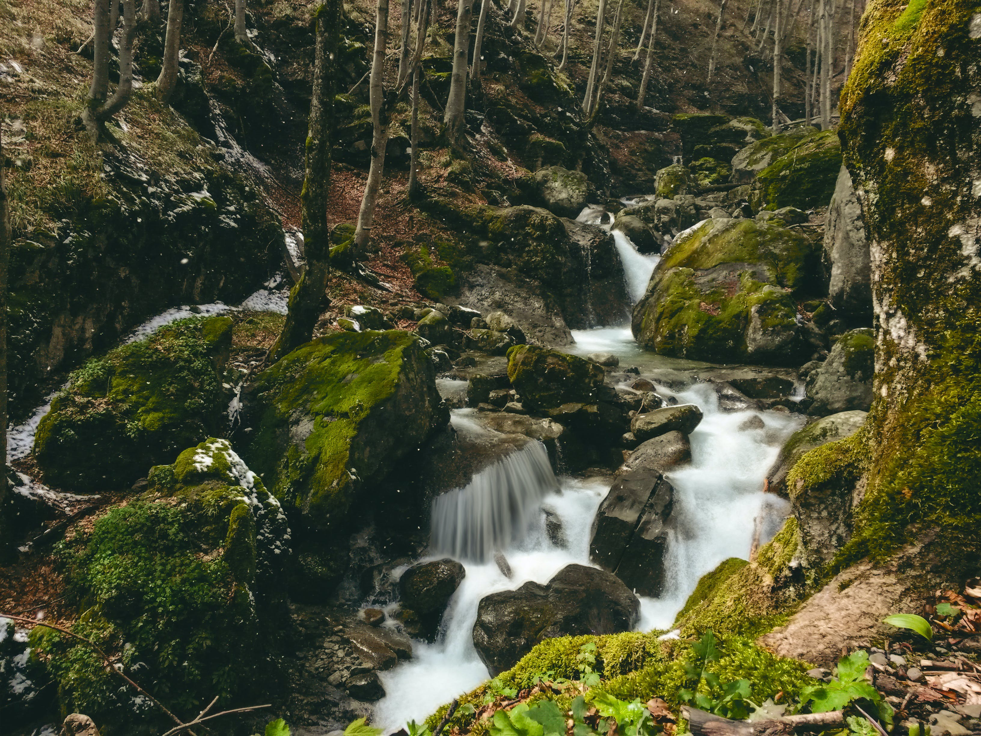 Free stock photo of mountain river forest rock green moss waterfall