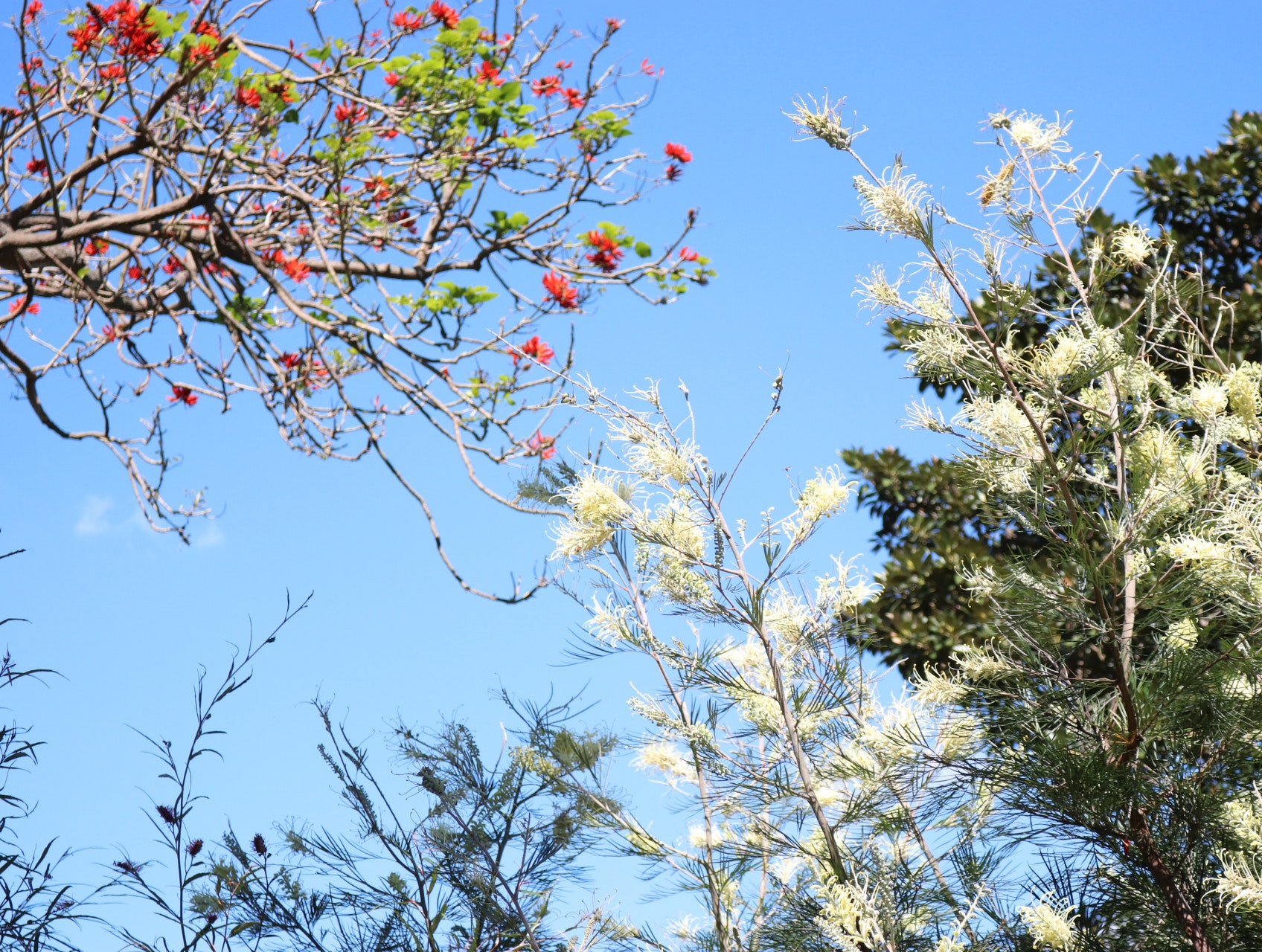 Free stock photo of beautiful flowers trees free download izmirmasajfo