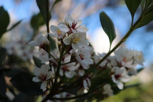 Безкоштовне стокове фото на тему «літня квітка»