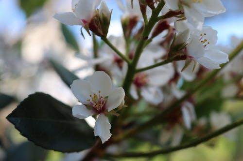 Безкоштовне стокове фото на тему «красиві квіти»