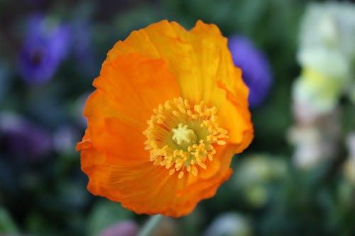 Безкоштовне стокове фото на тему «жовта квітка, літня квітка»