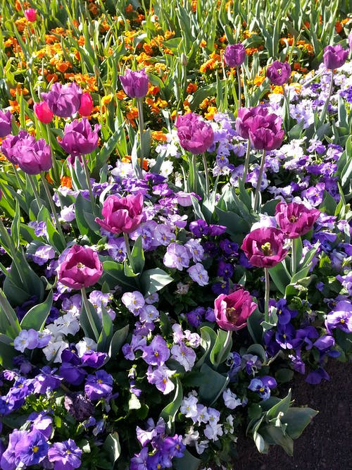 Безкоштовне стокове фото на тему «квіти, красиві квіти»