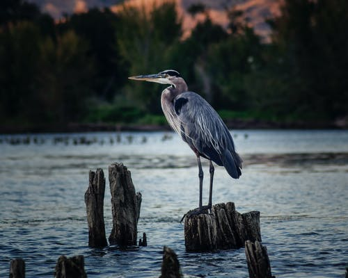 Bird Perched On Wood