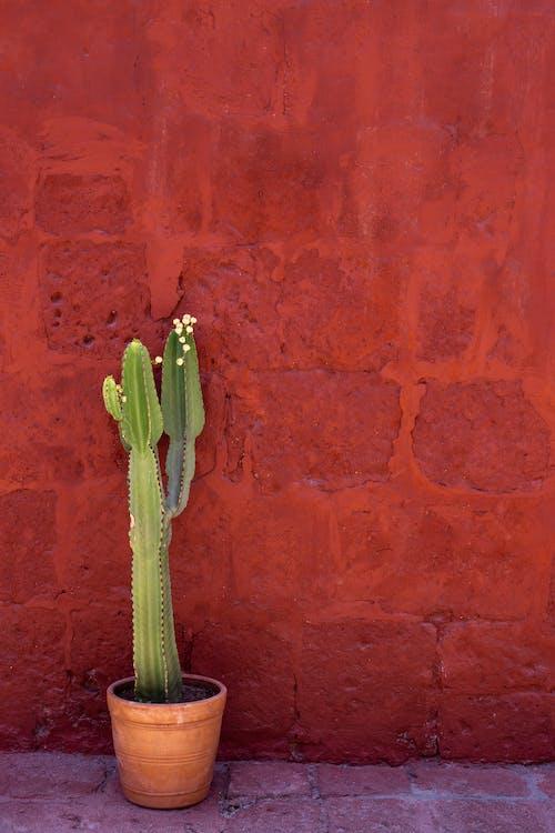 Бесплатное стоковое фото с завод, кактус, колючий