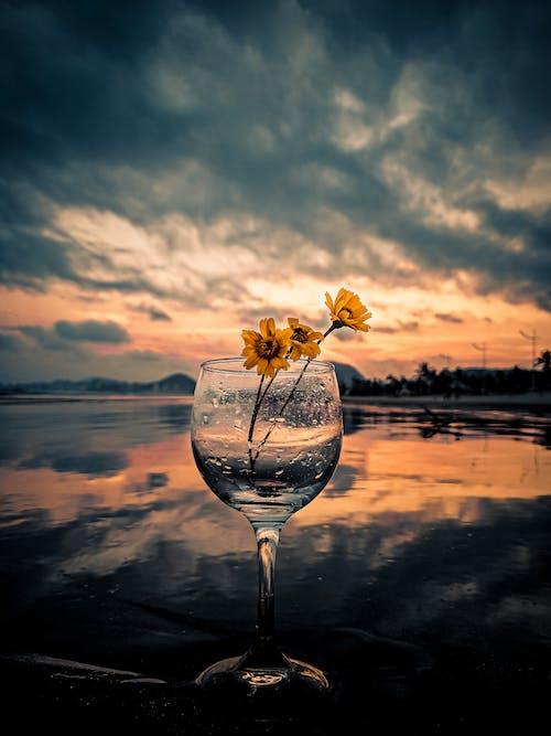 Free stock photo of beautiful flowers, champagne glasses, daisy, daisy flower