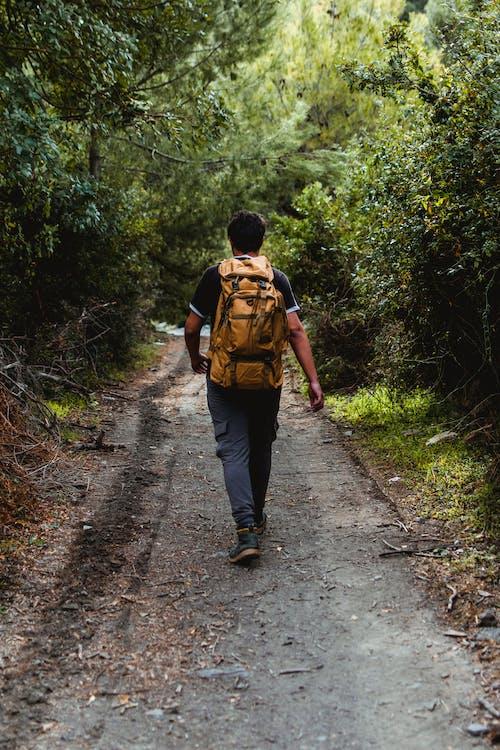 Man Walking On Pathway Between Green Trees