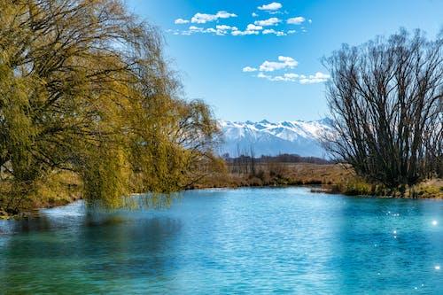 Trees Beside River Under Blue Sky