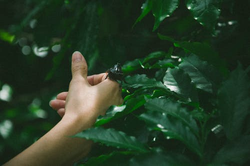 Free stock photo of hand, insects, mothernature, natural