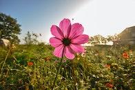 field, meadow, flower