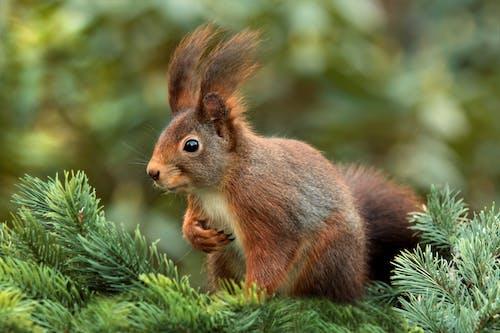 Δωρεάν στοκ φωτογραφιών με macro, άγρια φύση, γκρο πλαν, ζώο