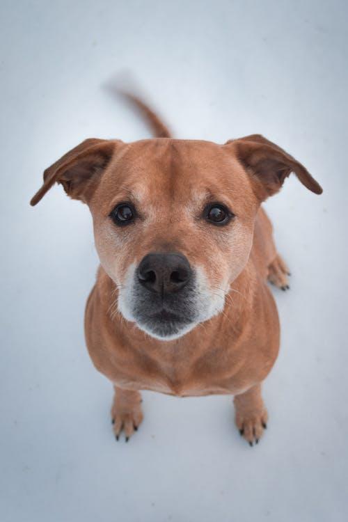 Fotobanka sbezplatnými fotkami na tému cicavec, pes, psovitá šelma, rozkošný