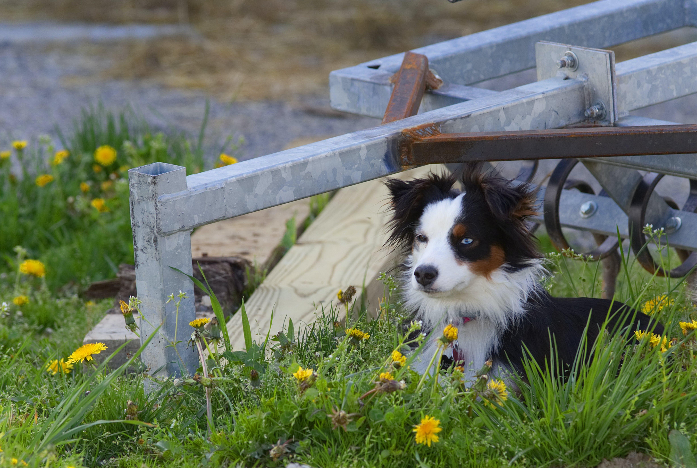 Free stock photo of animal, dog, pet, spring