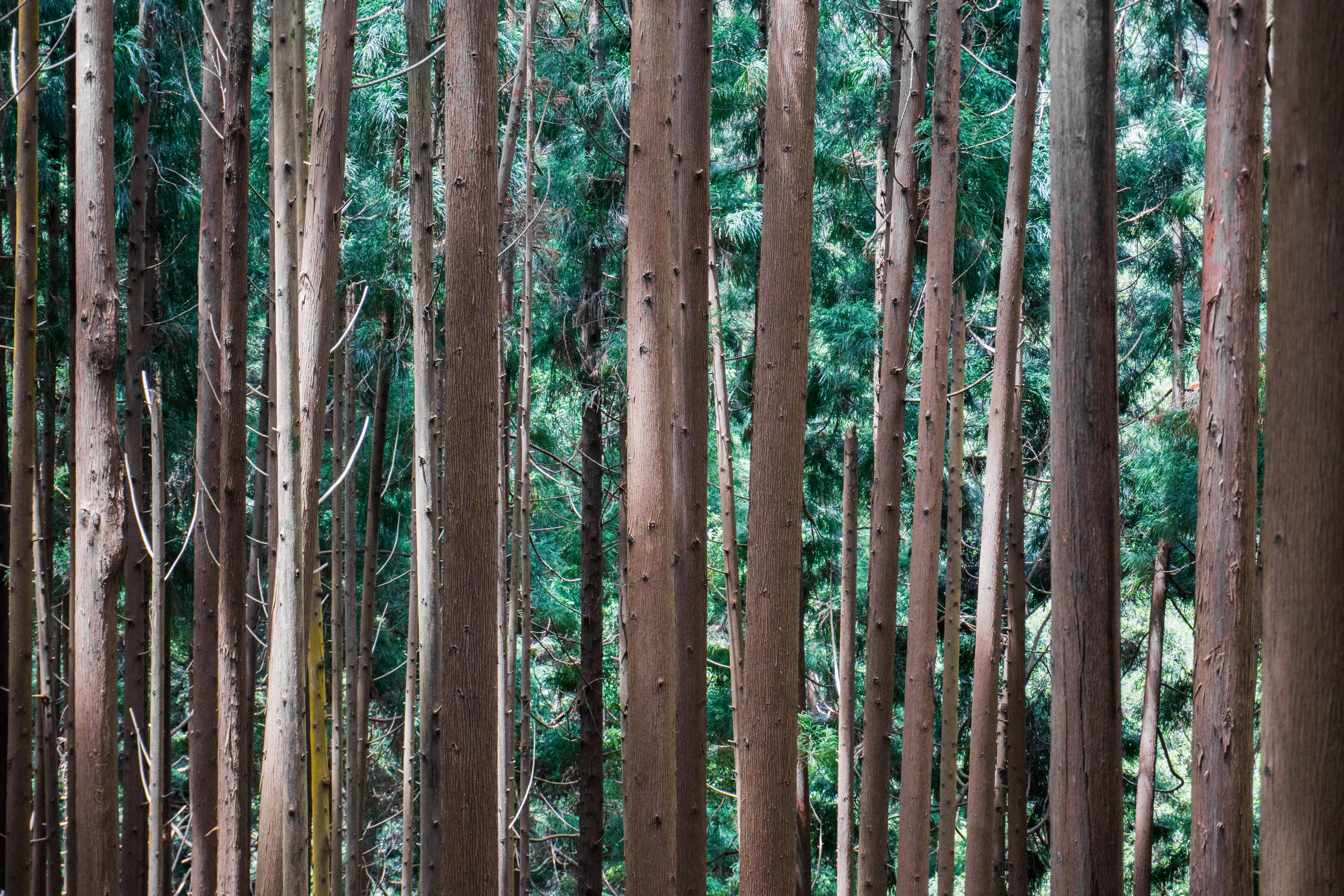 Free stock photo of wood, forest, trees