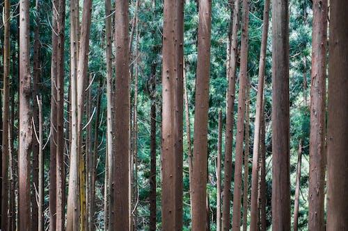 Ảnh lưu trữ miễn phí về cây, gỗ, rừng