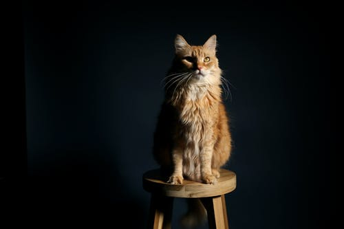 Brown Cat on Wooden Stool Chair