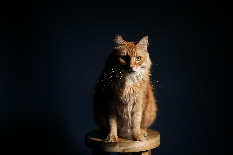 Free stock photo of animal, cat, cute, dark
