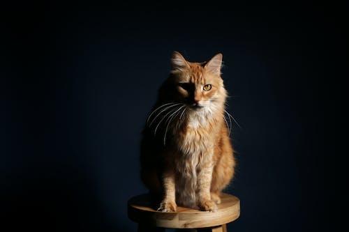 Безкоштовне стокове фото на тему «кішка, кошеня, милий, портрет»
