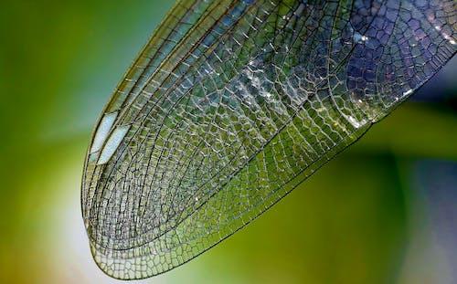 Gratis arkivbilde med dragonfly vinge, insekt, natur, nærme