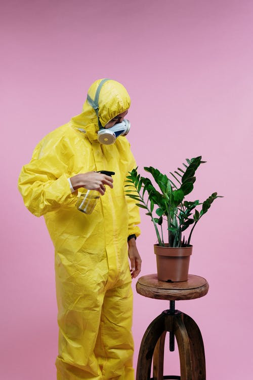 Person in Yellow Coveralls Spraying Plant