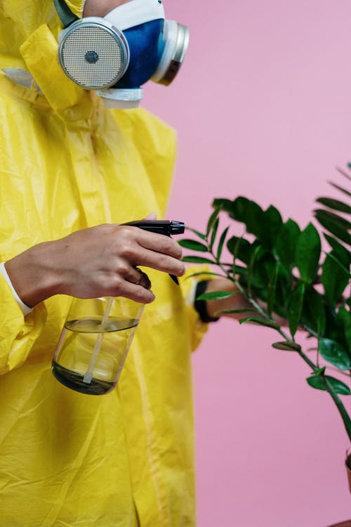 Person In Yellow Protective Suit Watering A Plant