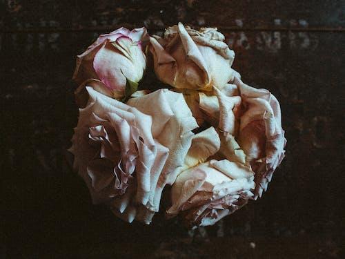 アート, しぼんだ, ダーク, デコレーションの無料の写真素材