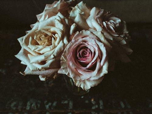 꽃이 피는, 꽃잎, 늙은, 레트로의 무료 스톡 사진