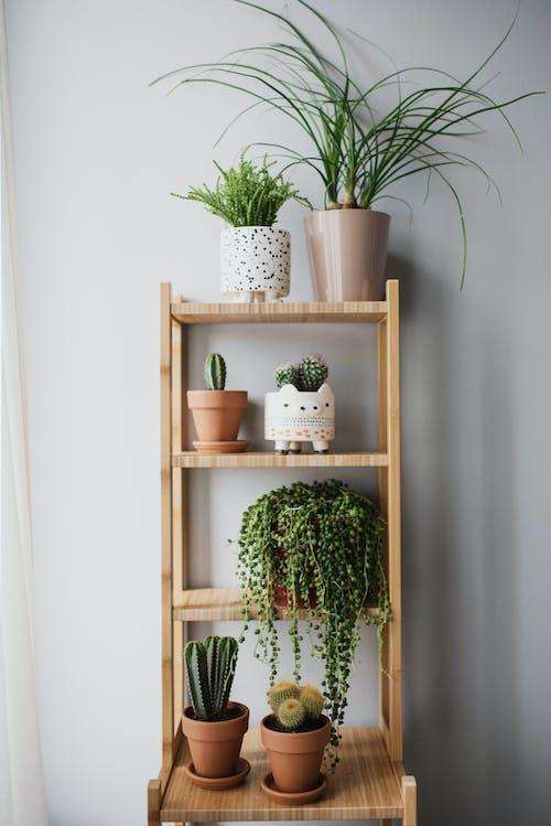 나무, 녹색 식물, 미니멀리스트의 무료 스톡 사진