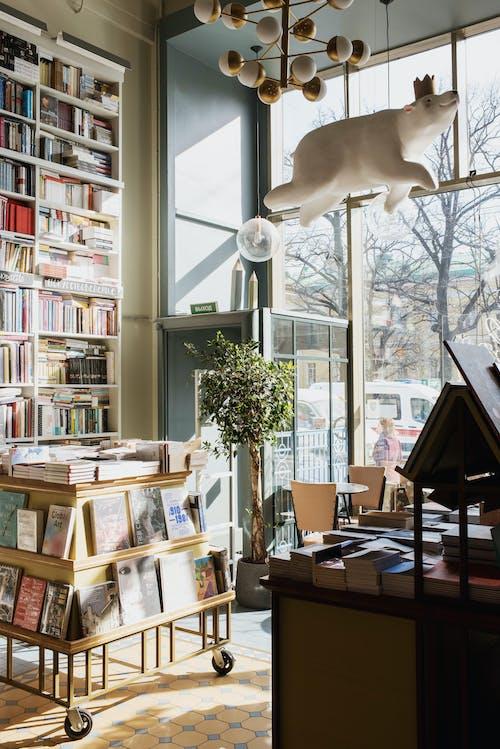 Gratis stockfoto met bibliotheek, binnen, binnenshuis, boeken