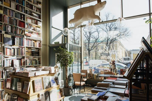 Gratis arkivbilde med bjørn, bok, bokhandel, bokhylle