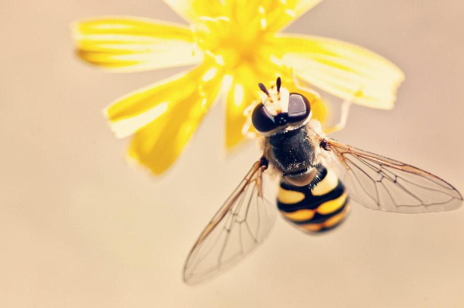 antenna, bee, bloom