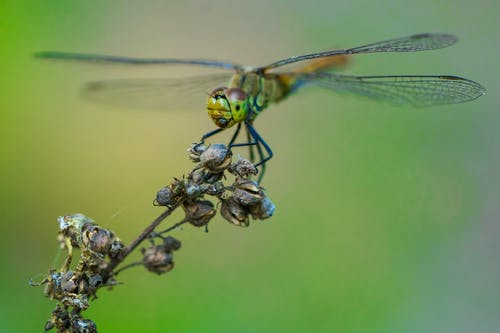 Dragonfly Perched On A Plant In Close Up Photography