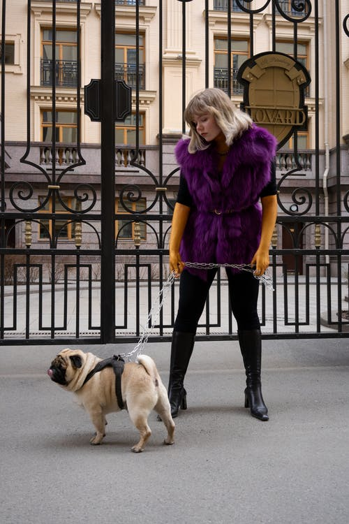 Woman In Purple Fur Coat With A Dog