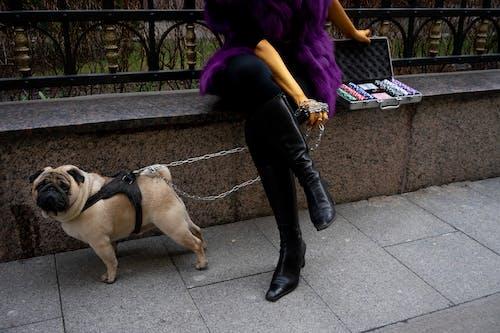 Pug On A Leash Beside A Woman