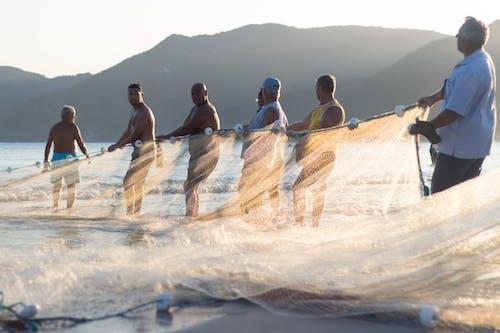 คลังภาพถ่ายฟรี ของ florianopolis, pantano do sul, กลุ่ม
