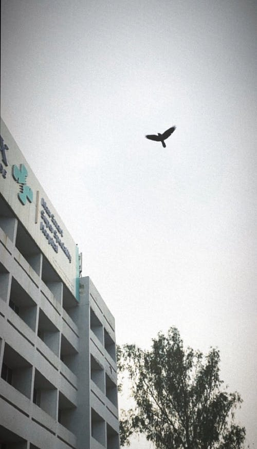 Free stock photo of #bird, #hospital, #mobilechallenge, #outdoorchallenge