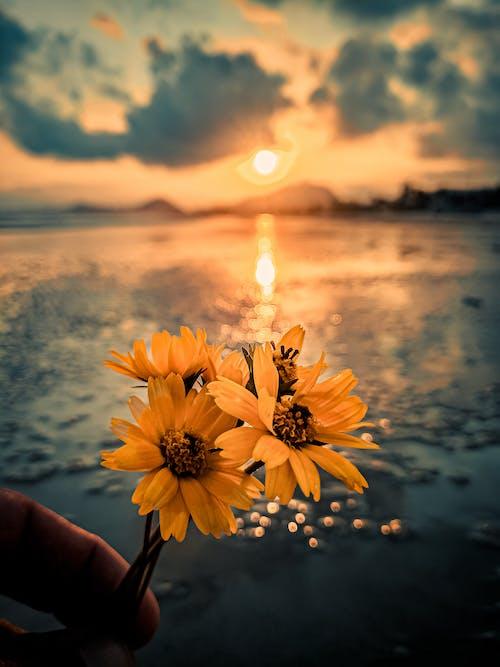 Бесплатное стоковое фото с восход, закат, максросъемка, море