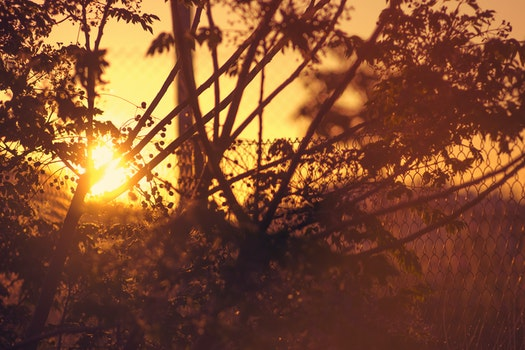 Free stock photo of nature, trees, sunrise, morning
