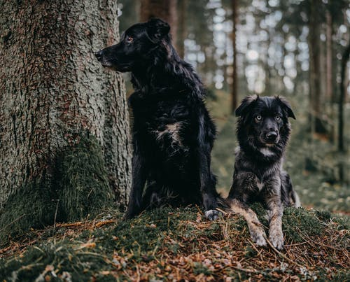 Black Dogs Near A Tree