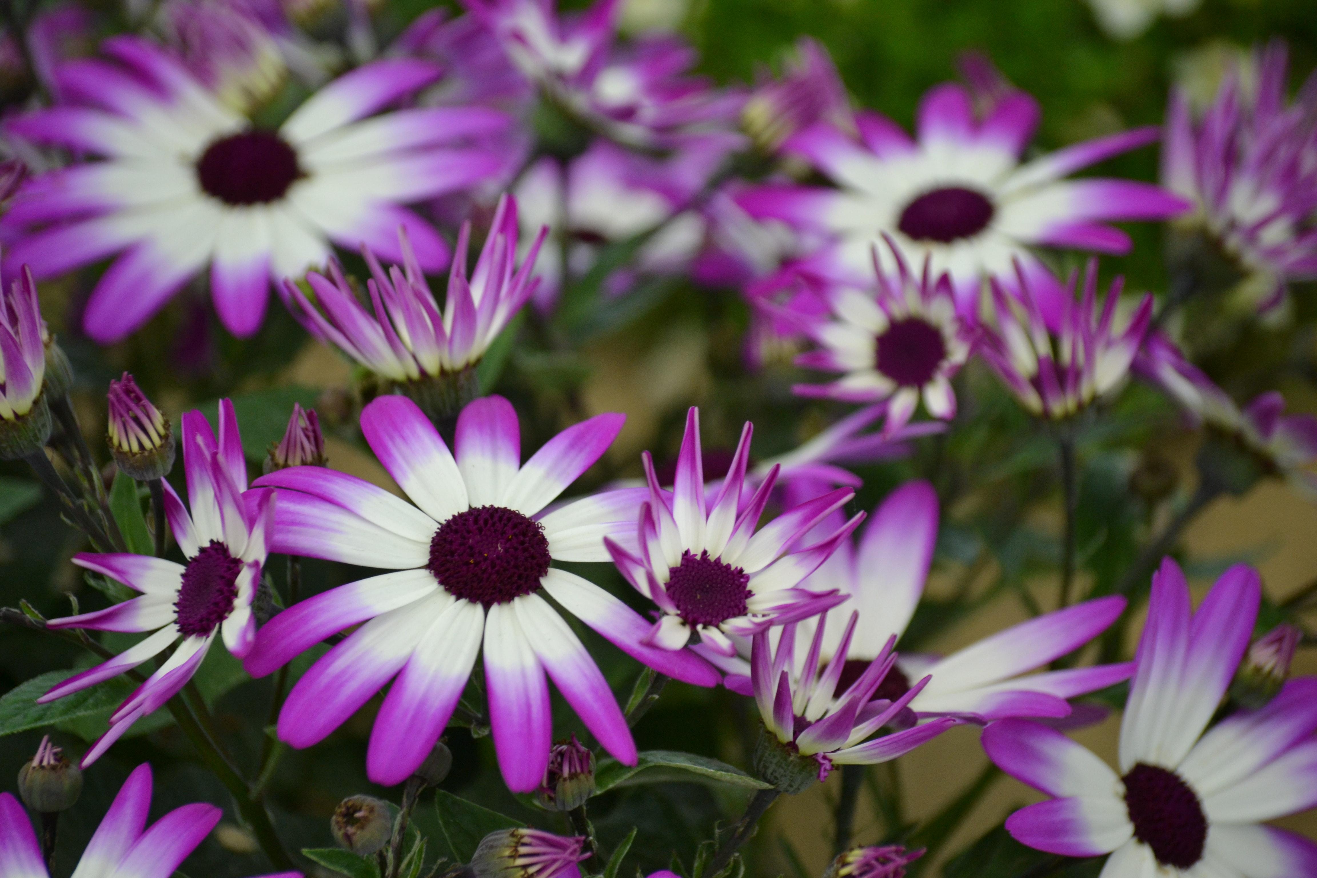 Purple flowers pexels free stock photos fetching more photos mightylinksfo